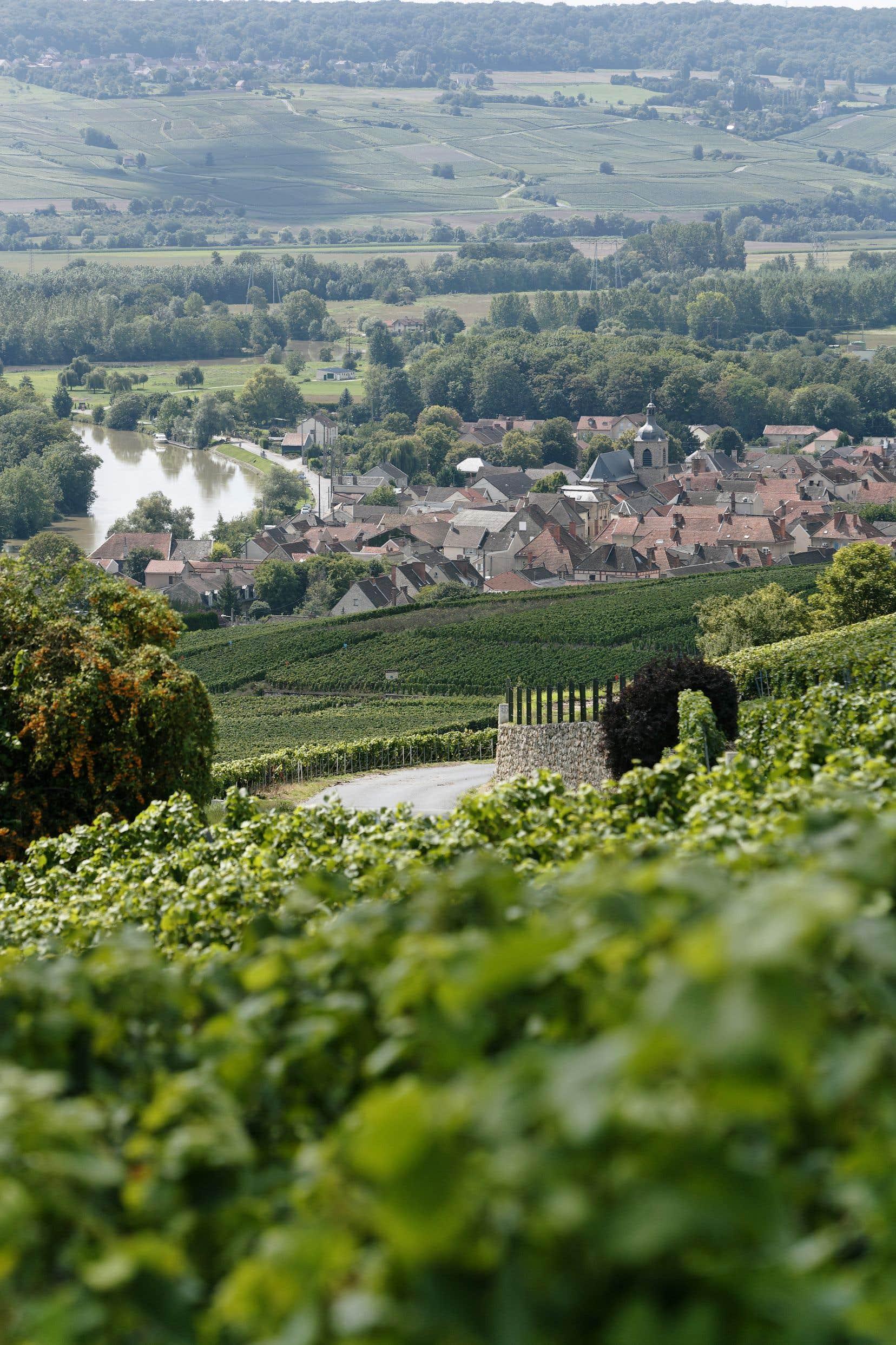 Vue du village de Cumières  à partir  du vignoble complanté  Les Houtrants