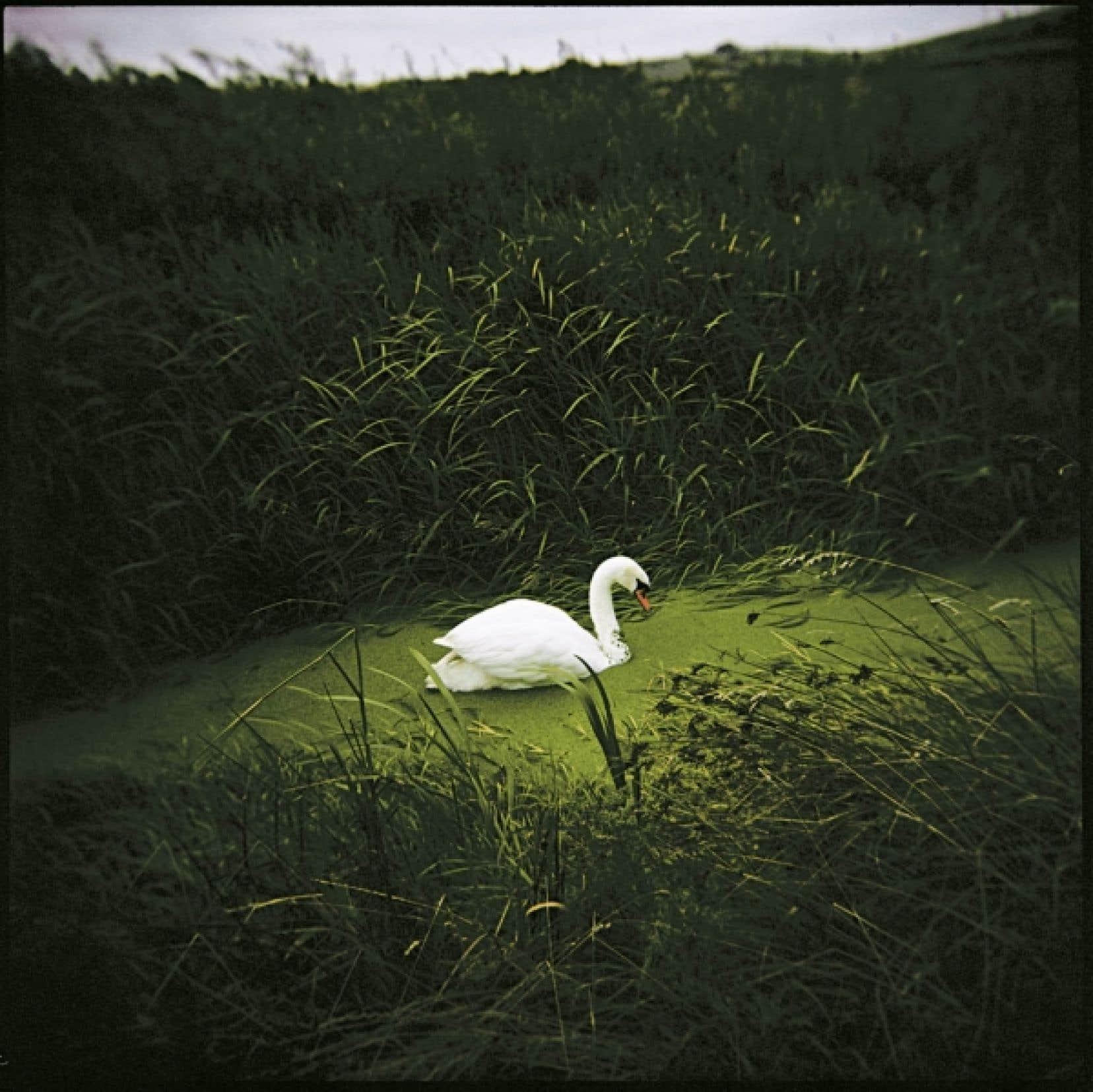 Ce cygne symbolise la mort de Virginia Woolf.<br />