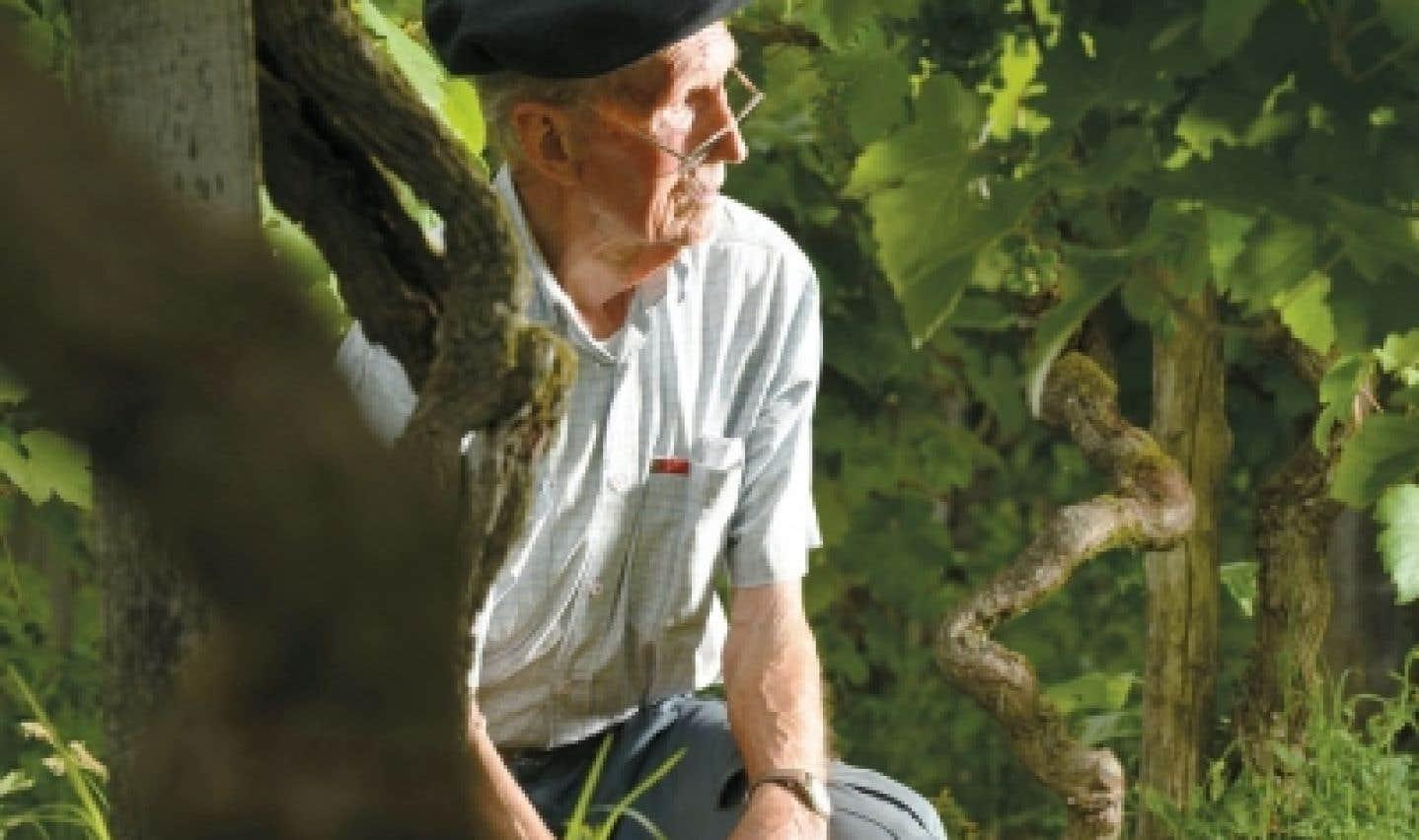 Vins de Saint-Mont - De précieux pieds de vigne