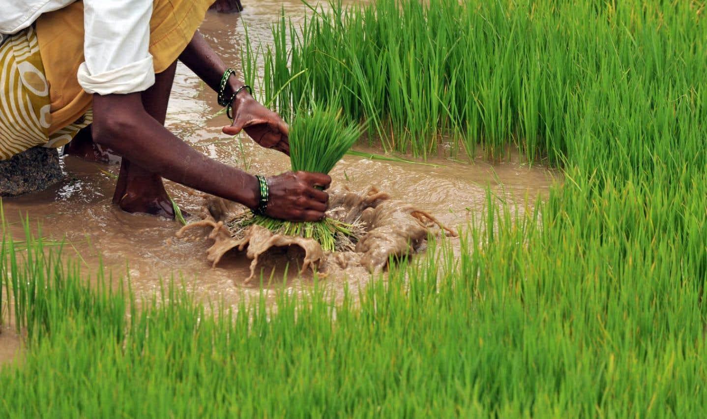 L'UPA et la FAO s'unissent pour l'agriculture familiale