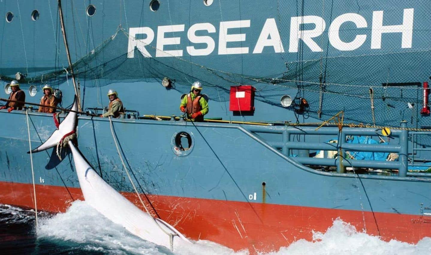 Les navires du Sea Shepherd rentrent victorieux au port