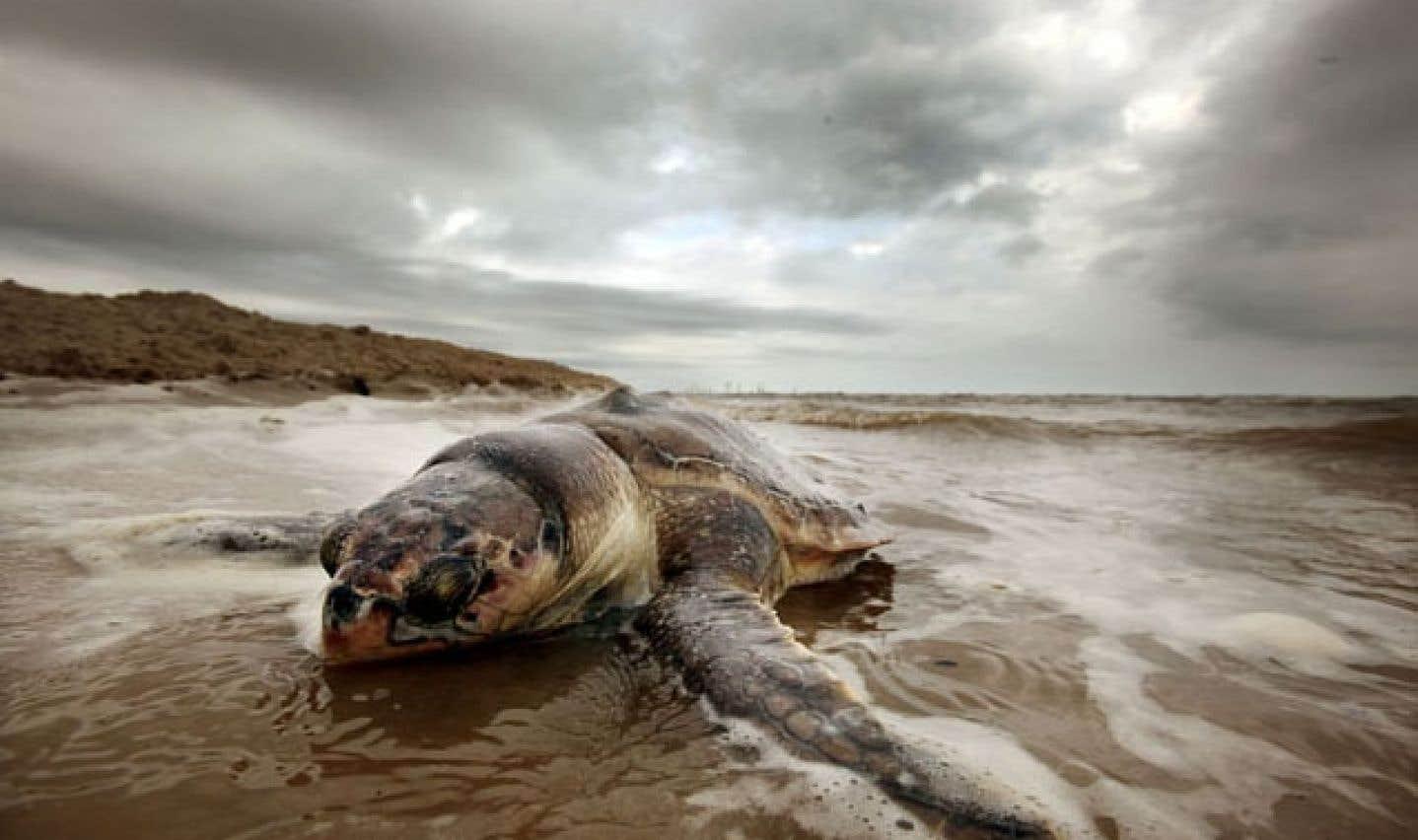 BP pourra forer de nouveau dans les milieux marins américains