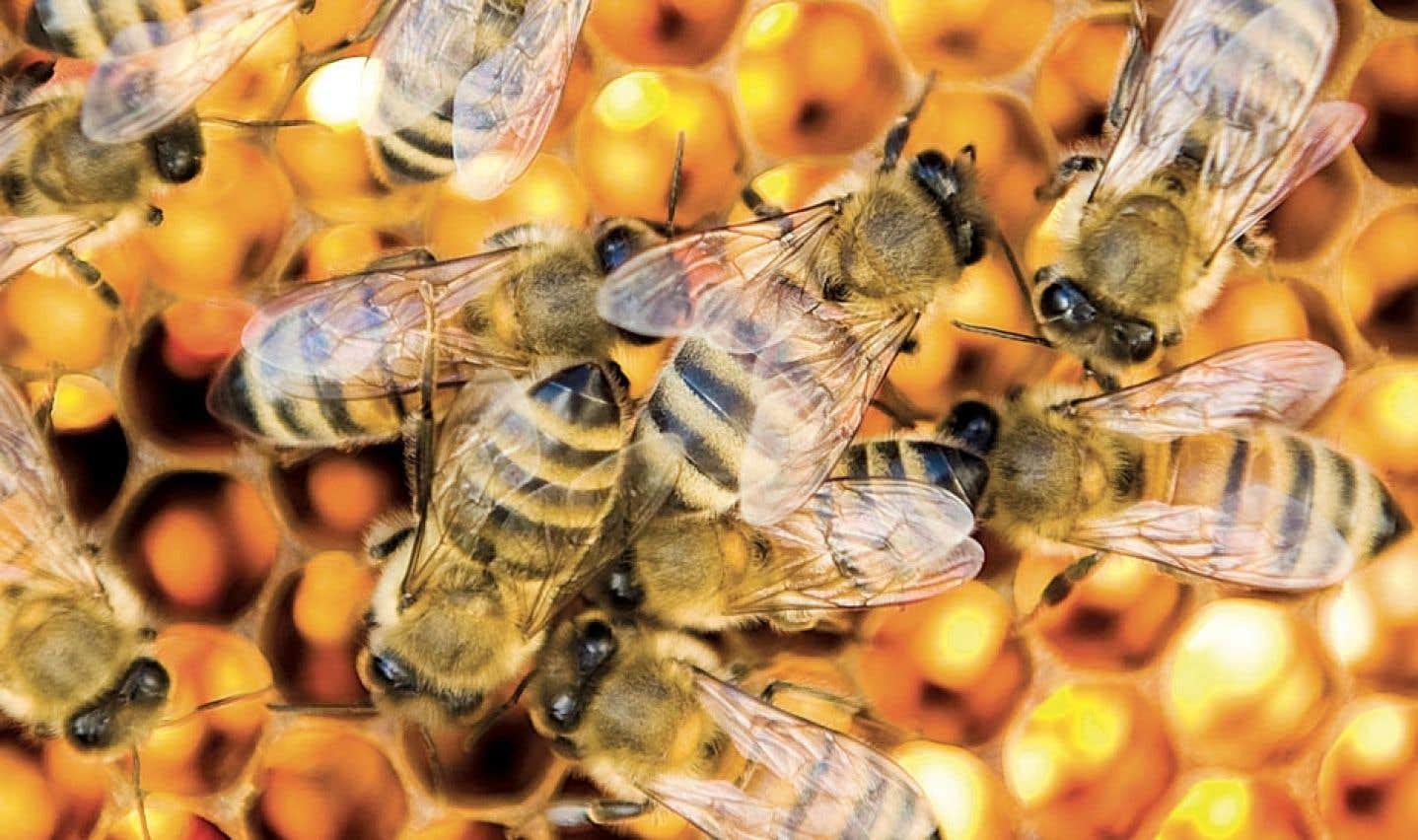 Les pesticides néonicotinoïdes, ennemis de la biodiversité?