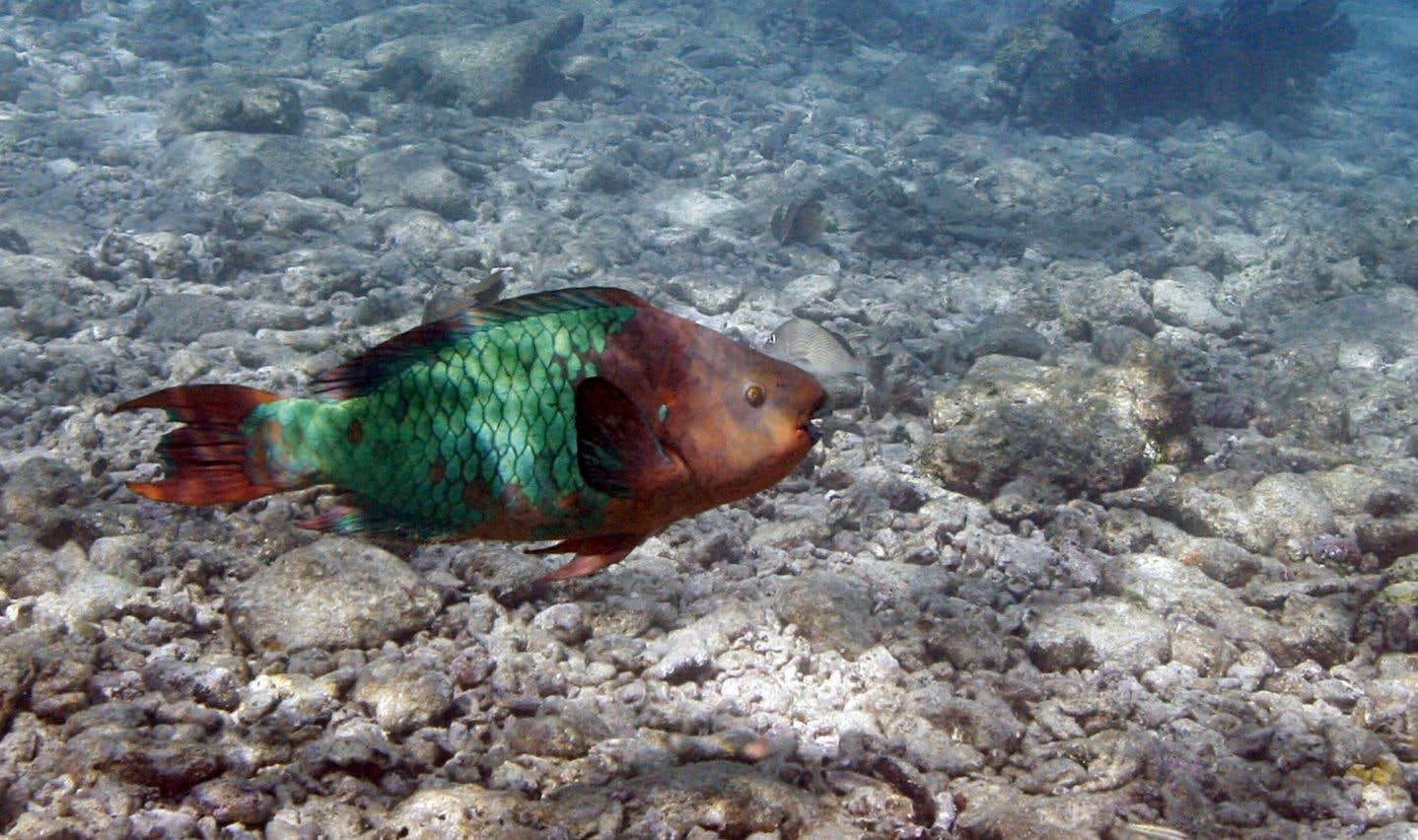 Les coraux des Caraïbes pourraient disparaître d'ici 20 ans