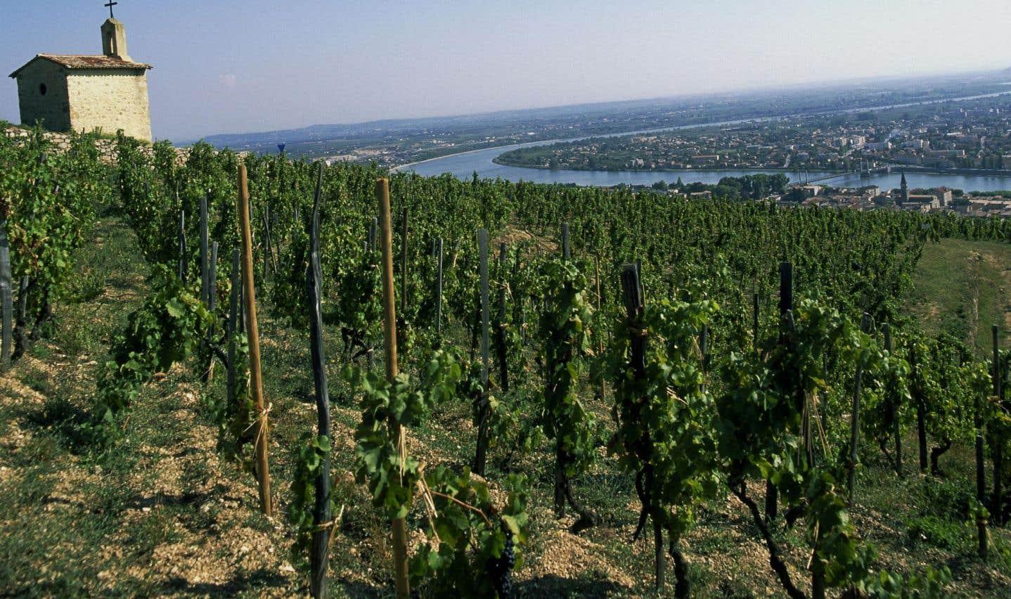 Un vignoble de la région française du Rhône