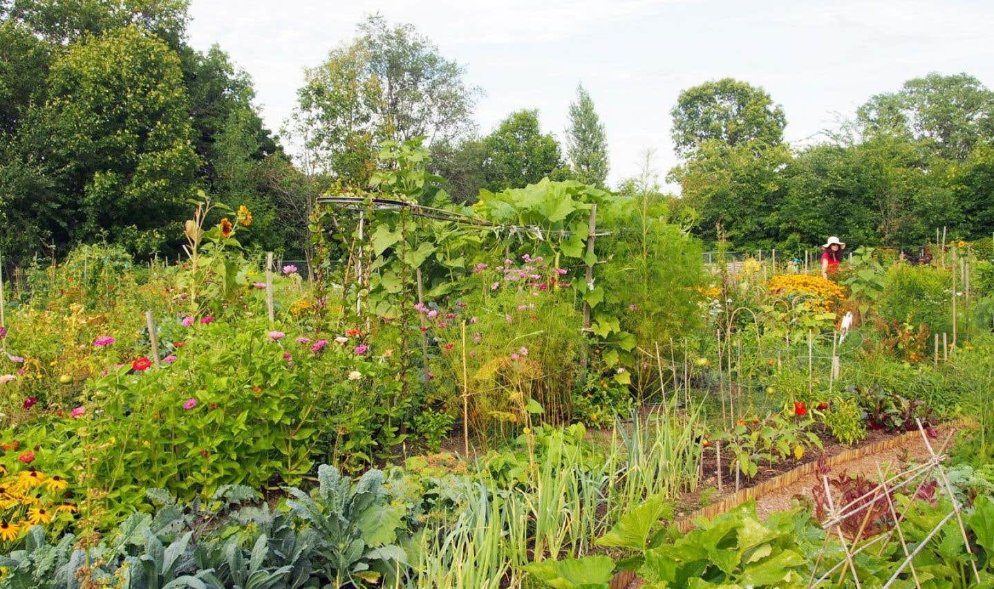 Une vue sur le jardin communautaire L'Églantier, situé à l'angle du boulevard Rosemont et de la 31eAvenue.