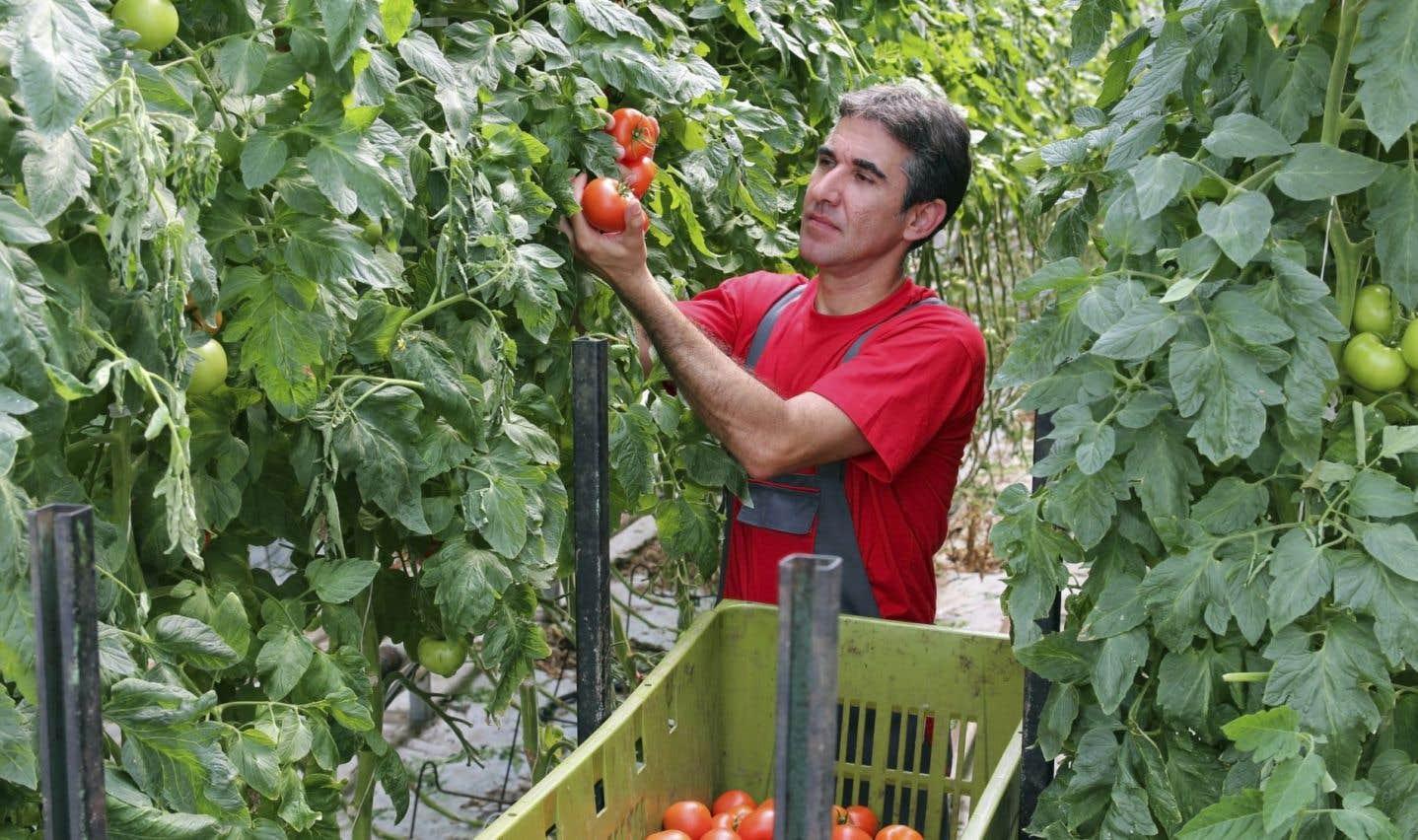 Québec est accusé de discriminer les travailleurs agricoles