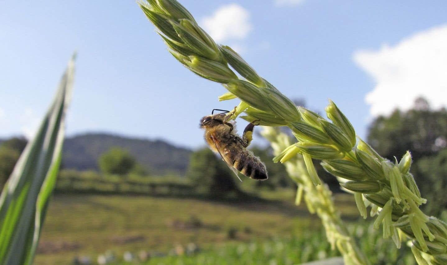 L'Ontario veut se débarasser de pesticides funestes