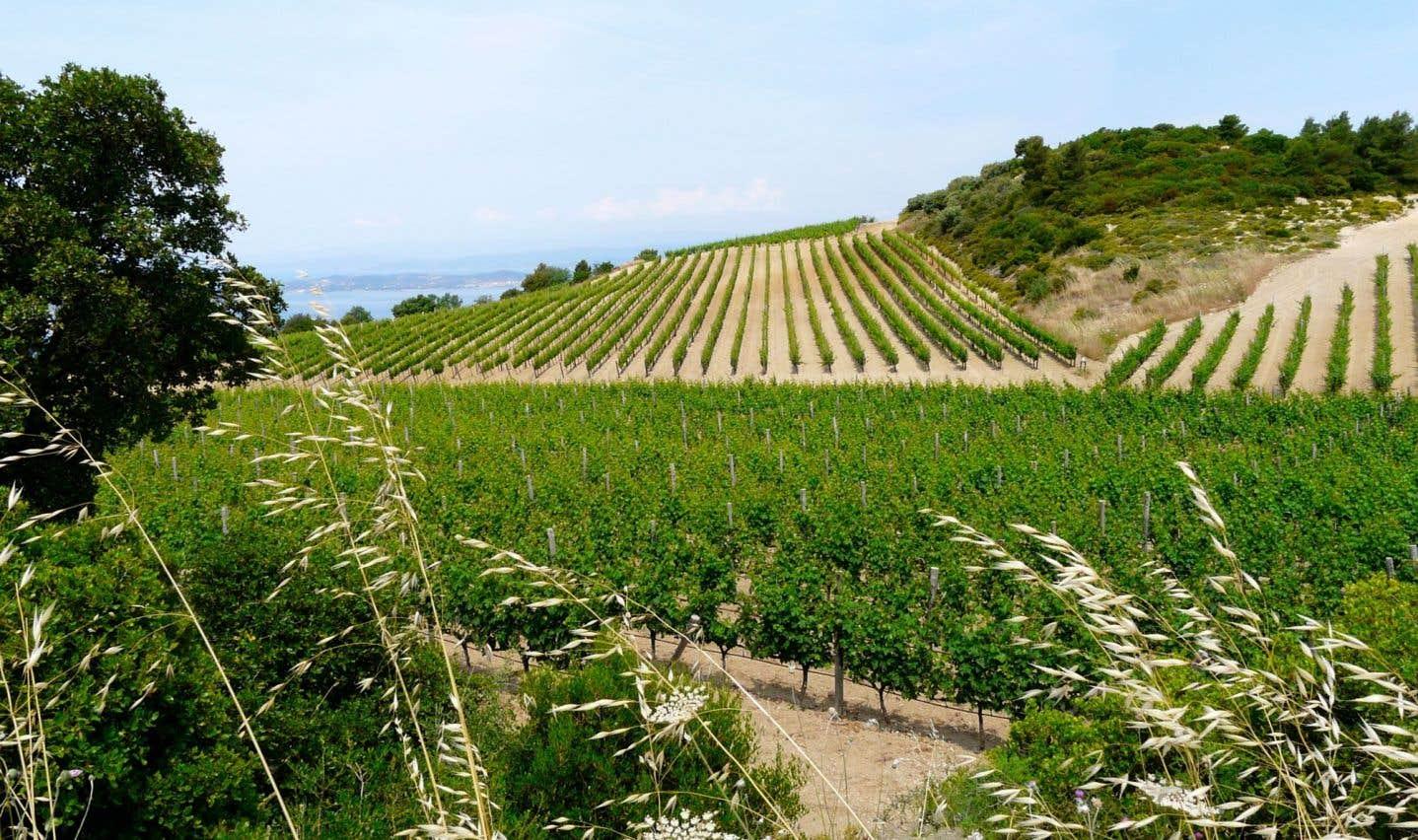 Vignoble grec en agriculture biologique