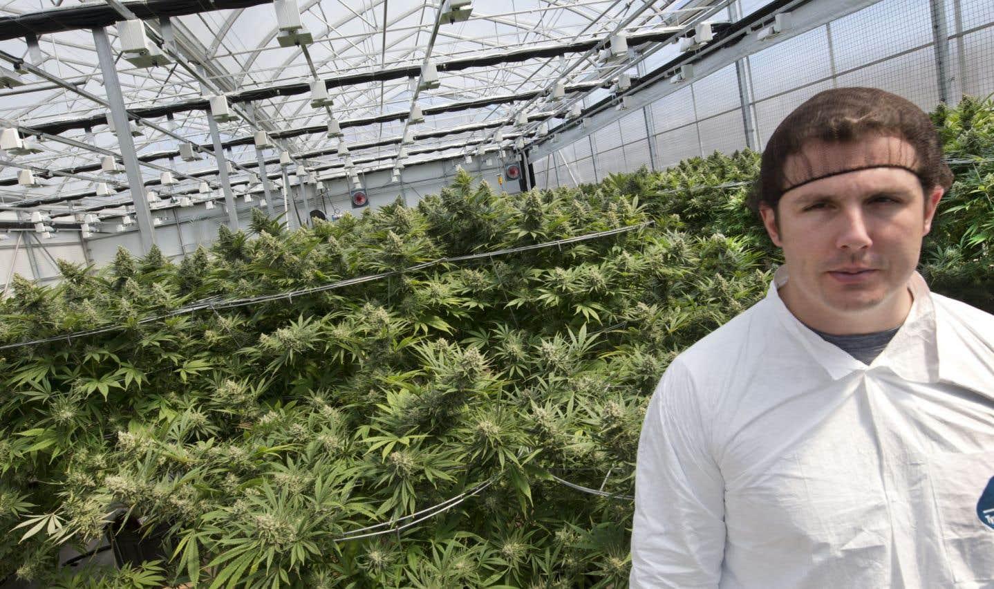 Le producteur québécois Hydropothicaire va augmenter sa production de façon spectaculaire au cours des prochains mois afin de répondre à la demande actuelle pour la marijuana médicale, dit son président, Sébastien St-Louis.
