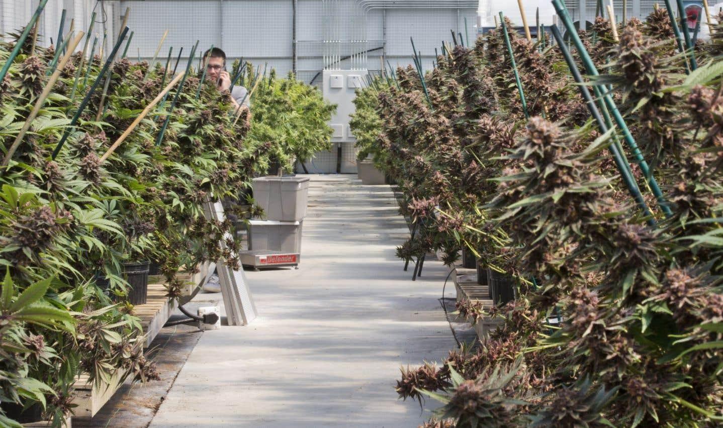 L'industrie du cannabis a faim