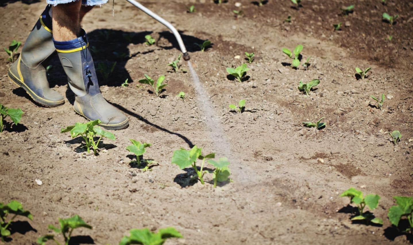Plus de 350 pesticides devront être réévalués