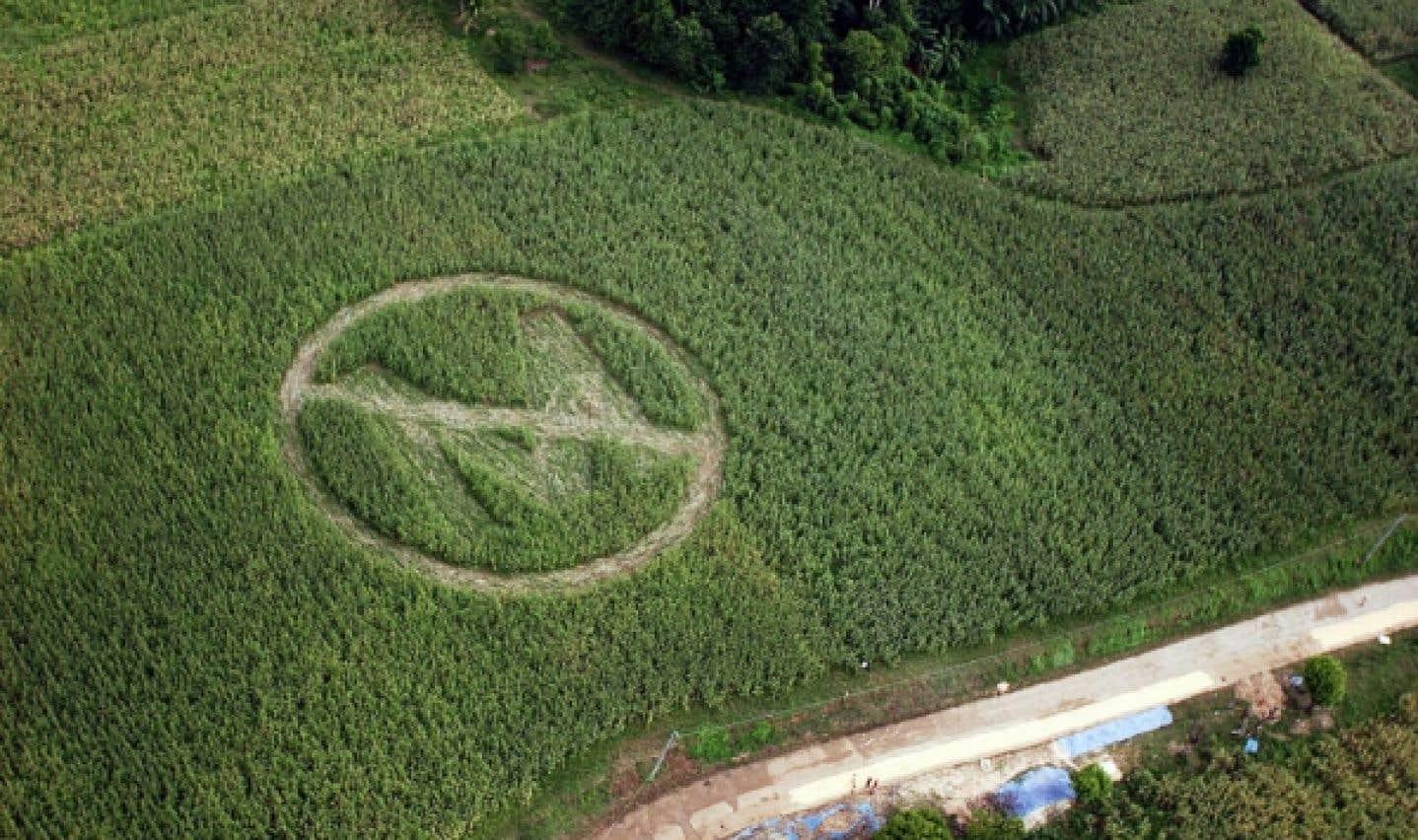Les pratiques commerciales de Monsanto sur la sellette