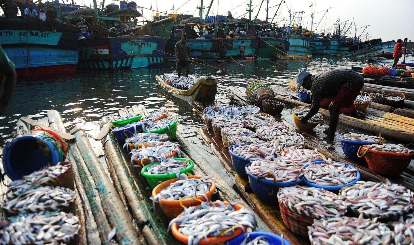 La surpêche en croissance dans le monde