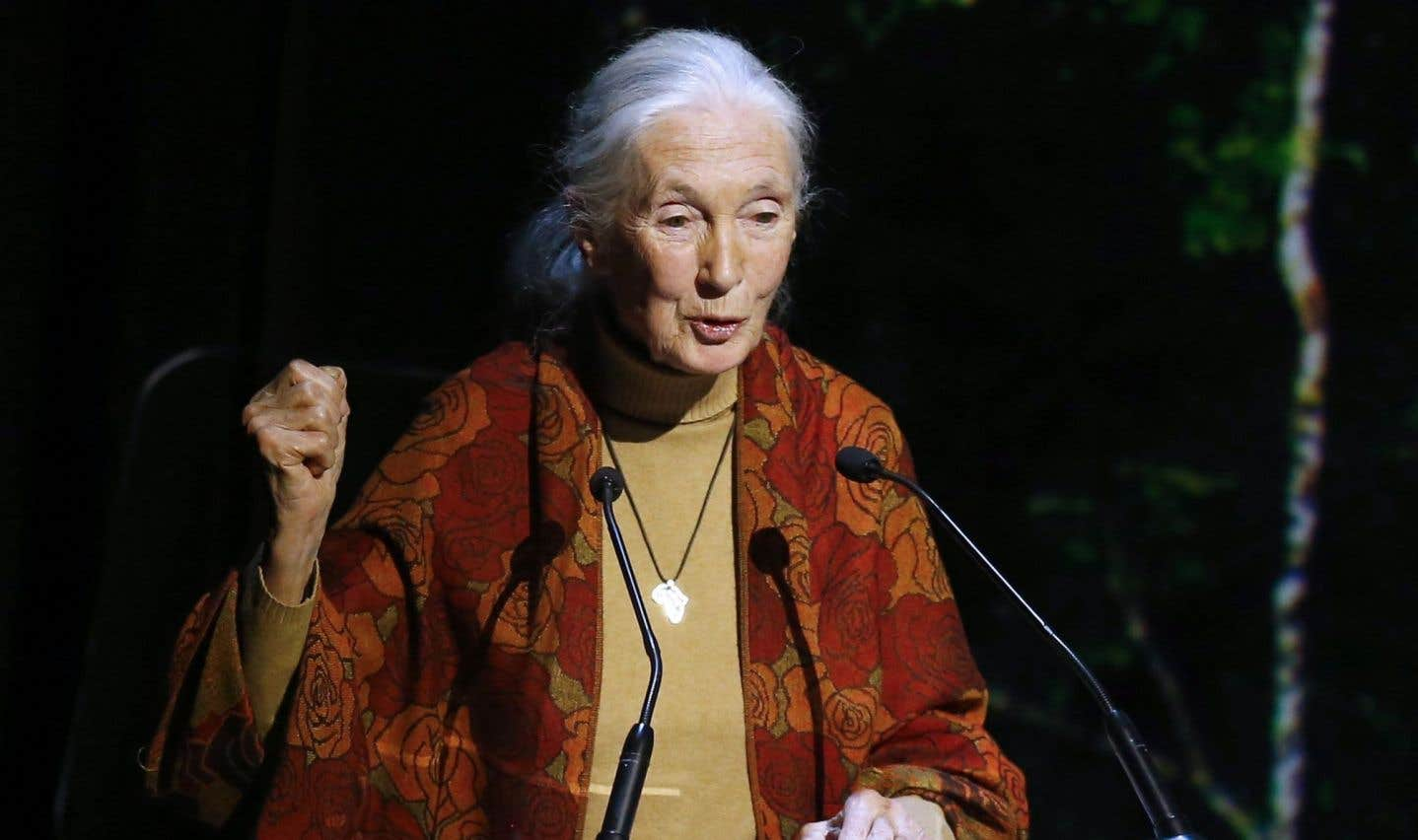 Jane Goodall met l'élevage animal intensif au pilori