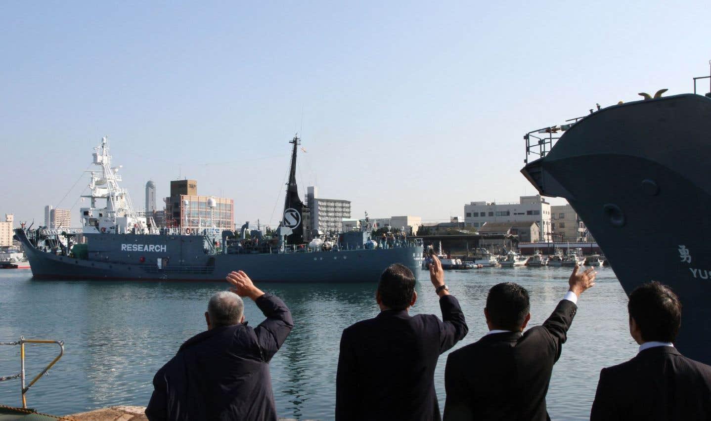 Bras de fer entre l'Australie et le Japon sur la chasse à la baleine