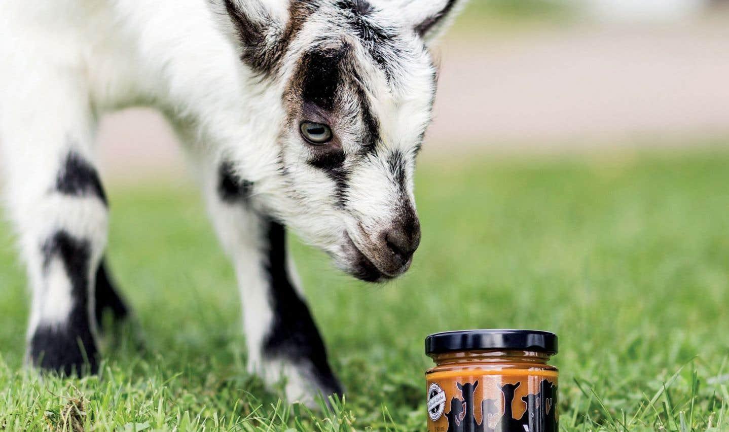 La texture et, surtout, le goût en finale du caramel au lait de chèvre Les douceurs caprines diffèrent beaucoup des recettes classiques de confiture de lait.