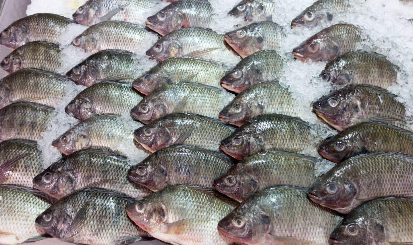 L'odeur du poisson