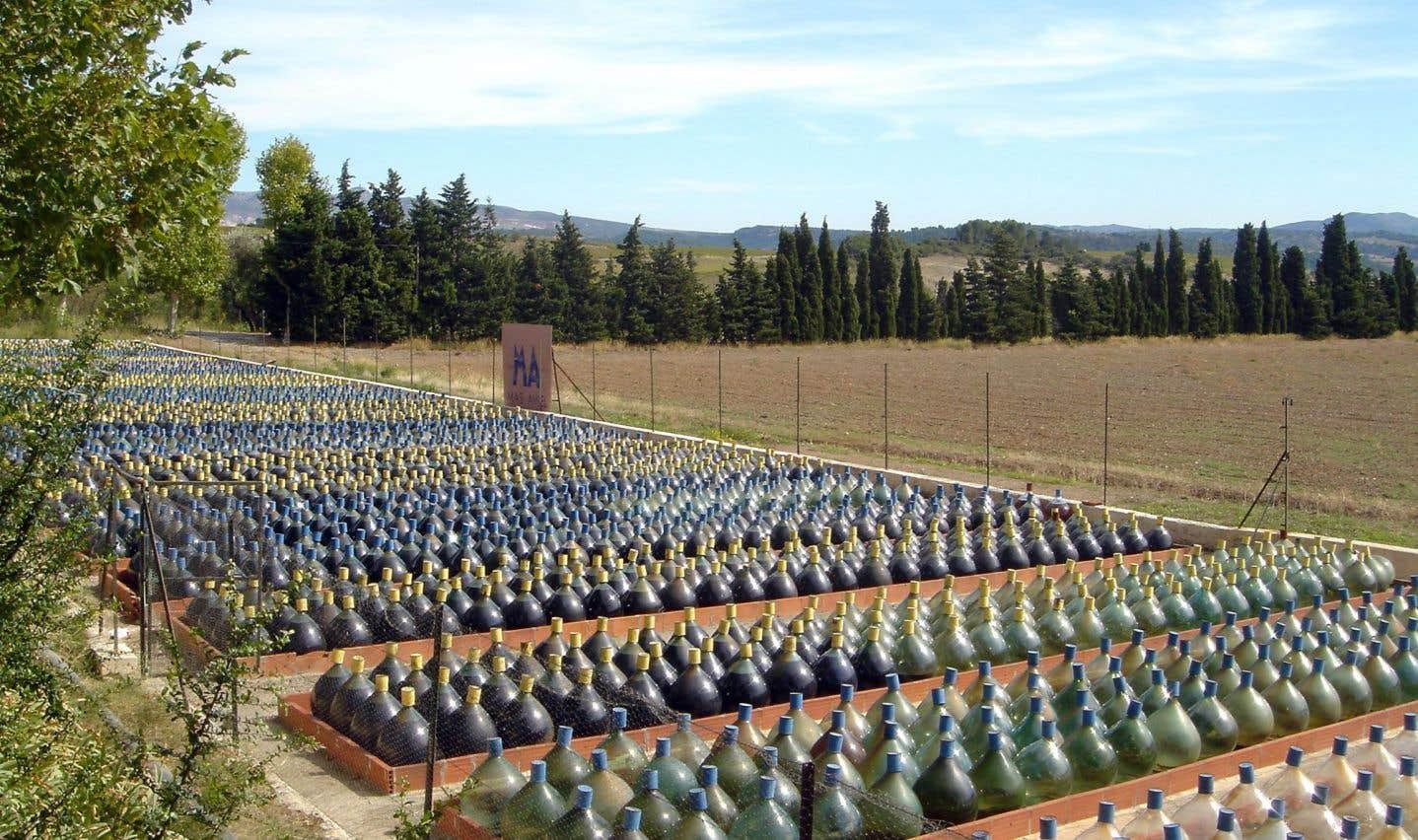 Des vins sous-évalués ou surévalués en 2017?