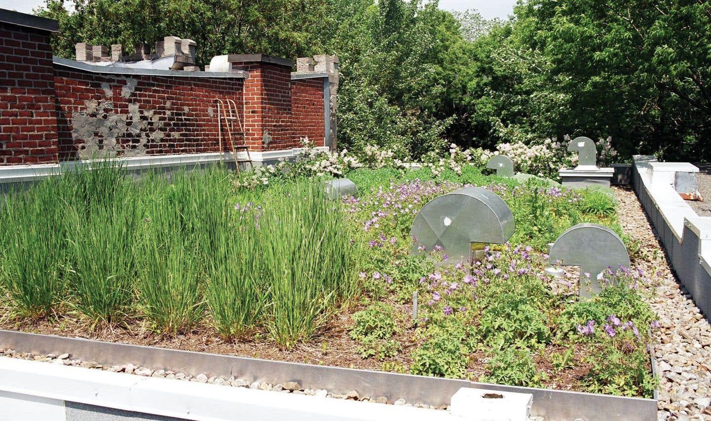 Pour les projets de 2000mètres carrés ou de six étages et plus, la Ville devrait exiger une superficie minimale de toiture végétalisée, comme le fait déjà Toronto.