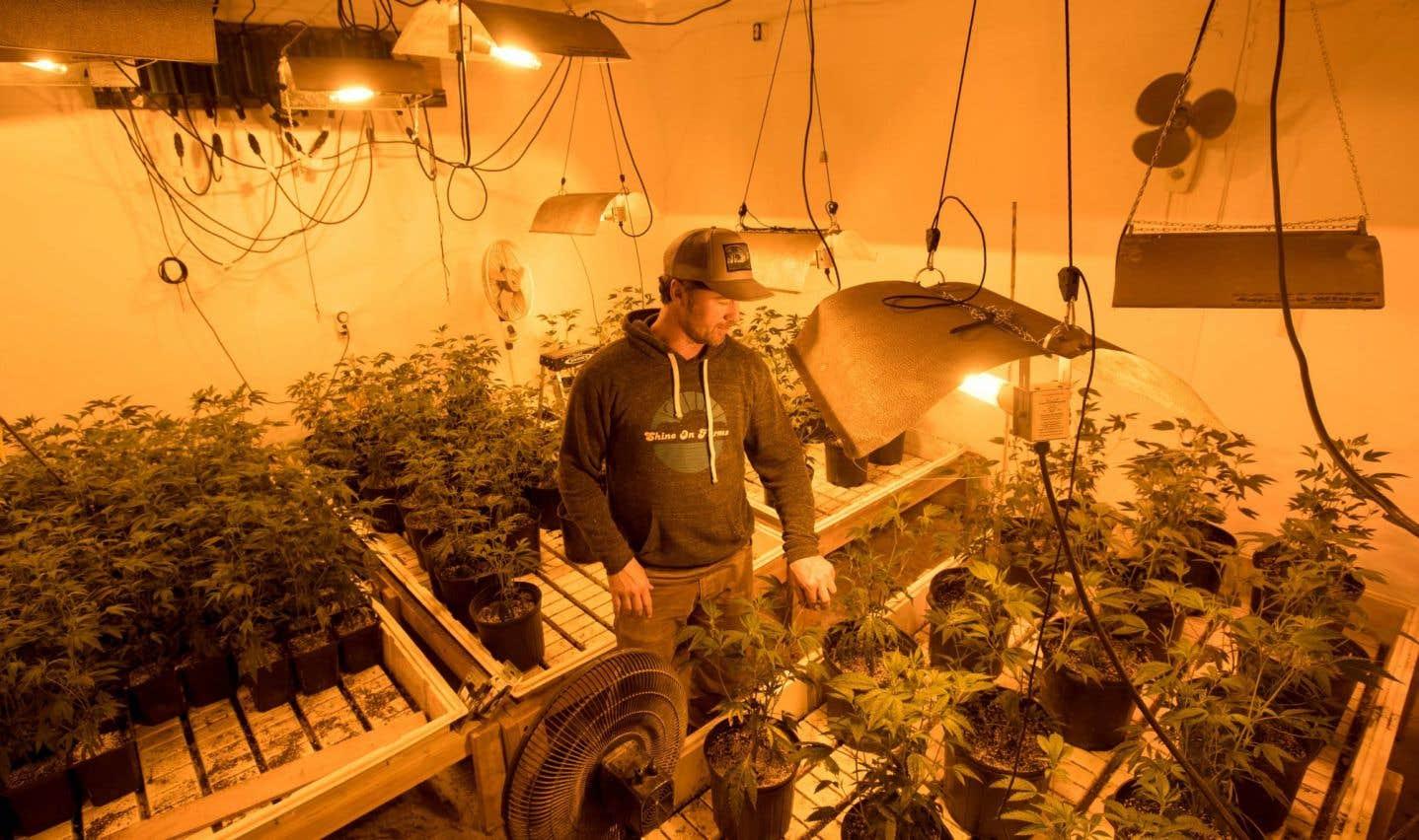 États-Unis: l'industrie du cannabis ne sait plus quoi faire de son argent
