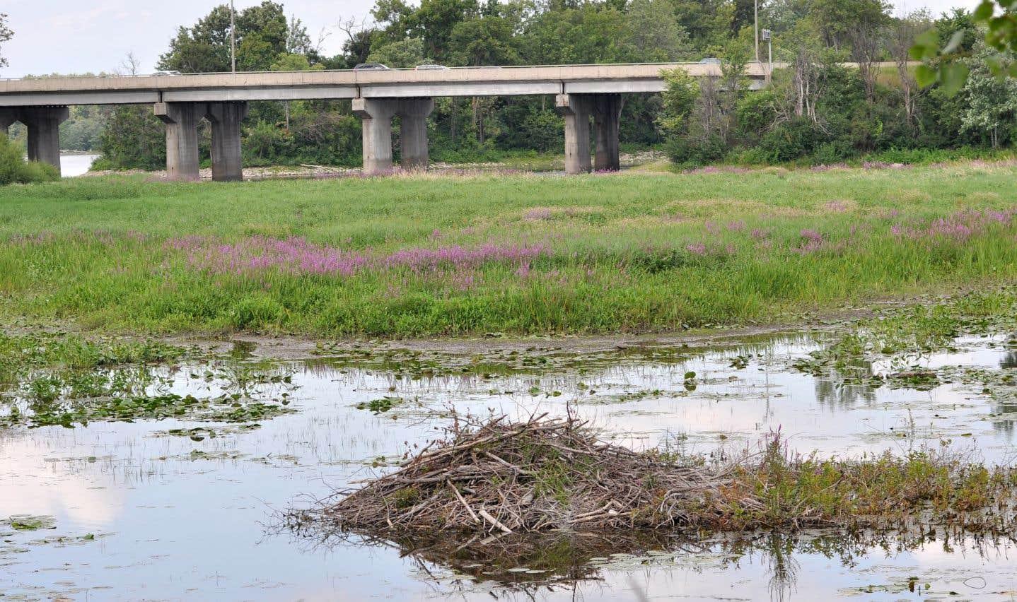 Combien valent les milieux humides?