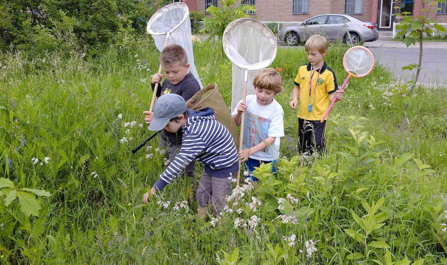 La biodiversité végétale et la ville