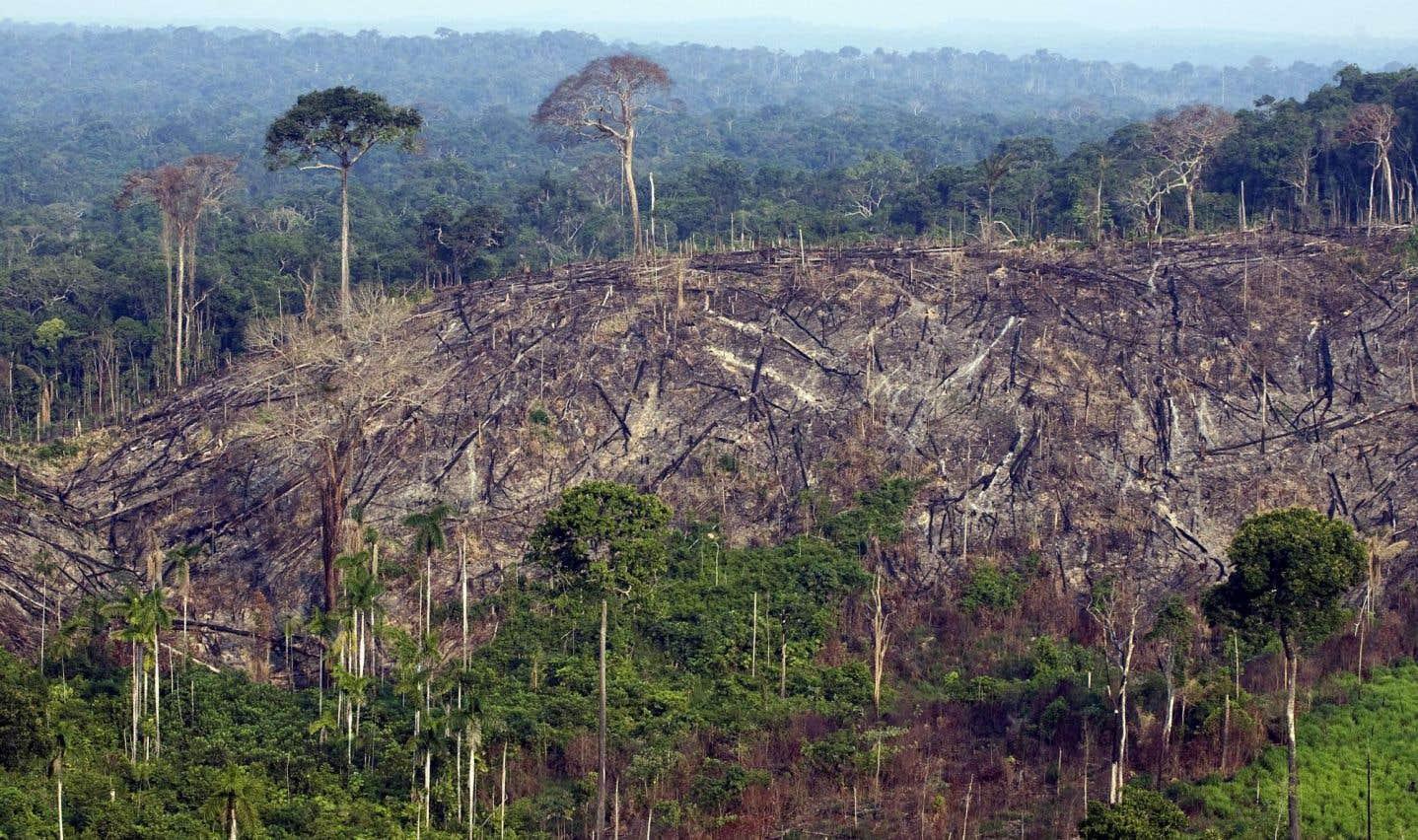 La Norvège va réduire son aide au Brésil en raison de la déforestation amazonienne
