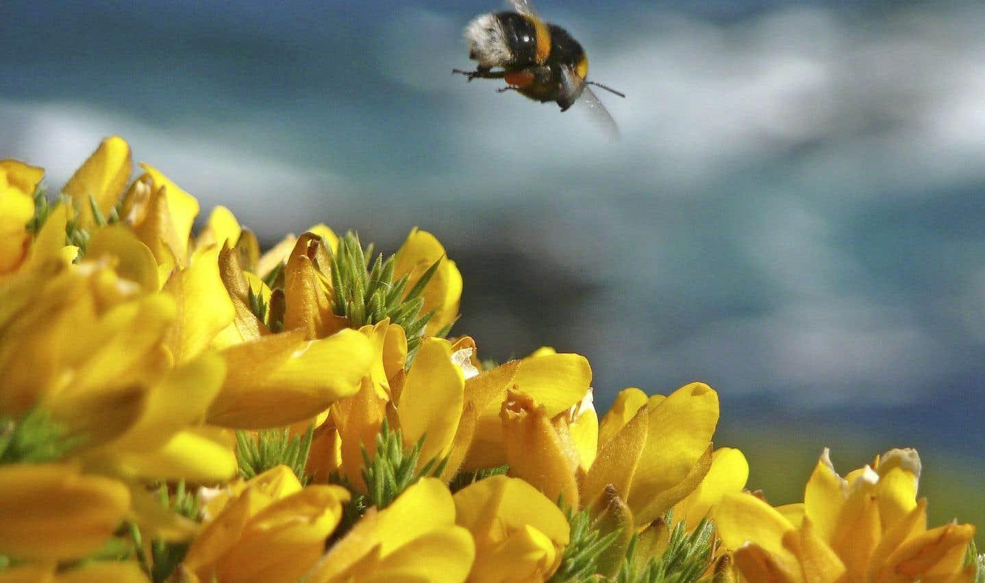 La nocivité du pesticide «tueur d'abeilles» confirmée