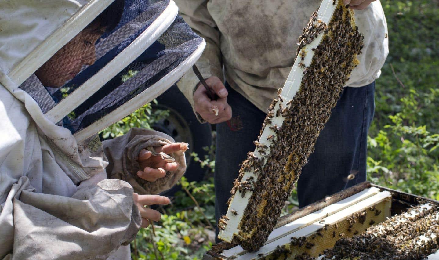 Québec veut réduire l'usage de  certains pesticides… sans les interdire