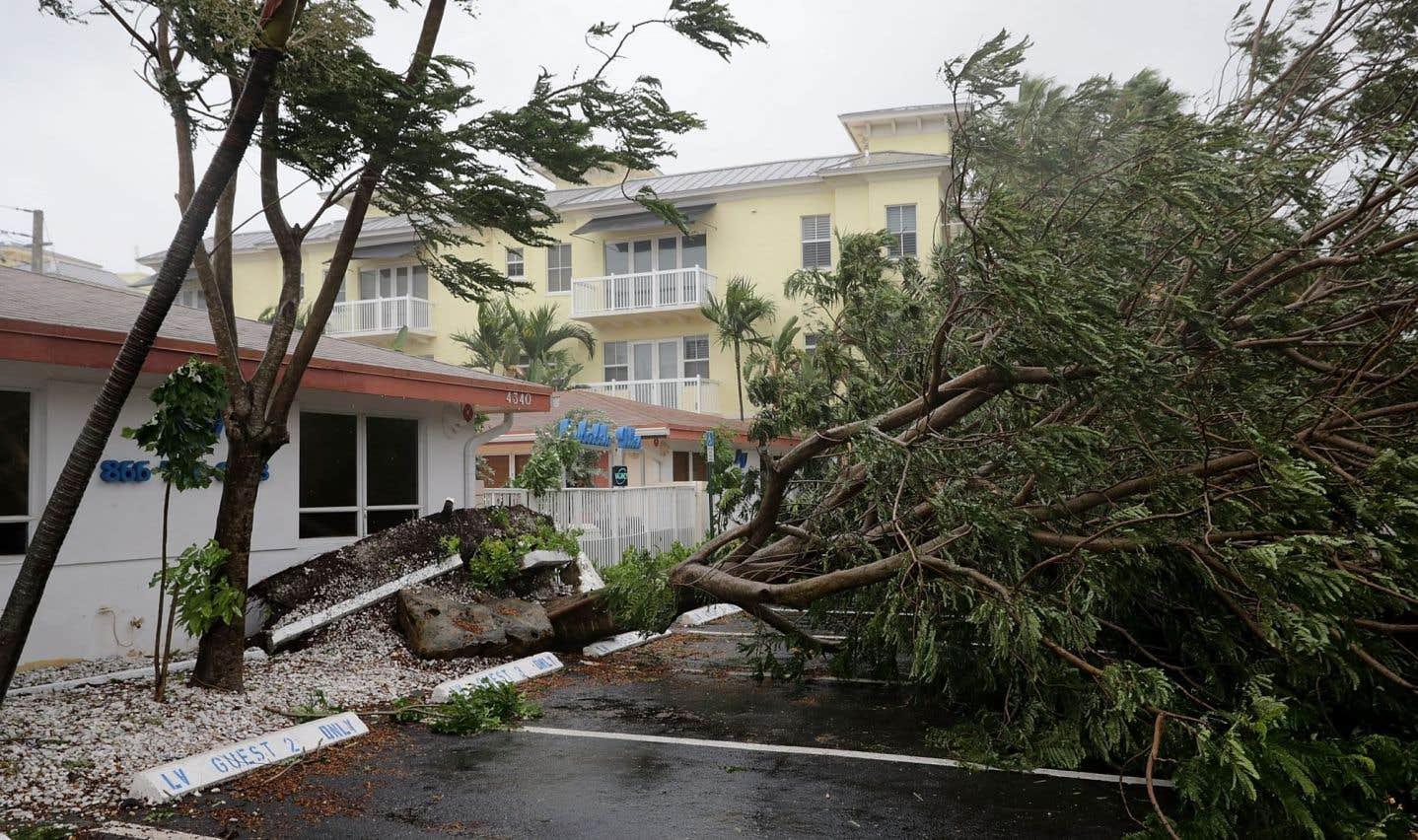 L'œil de l'ouragan «Irma»a touché dimanche la pointe sud de la Floride, pilonnée par des vents de 215?km/h. Ici un arbre est tombé à Fort Lauderdale.