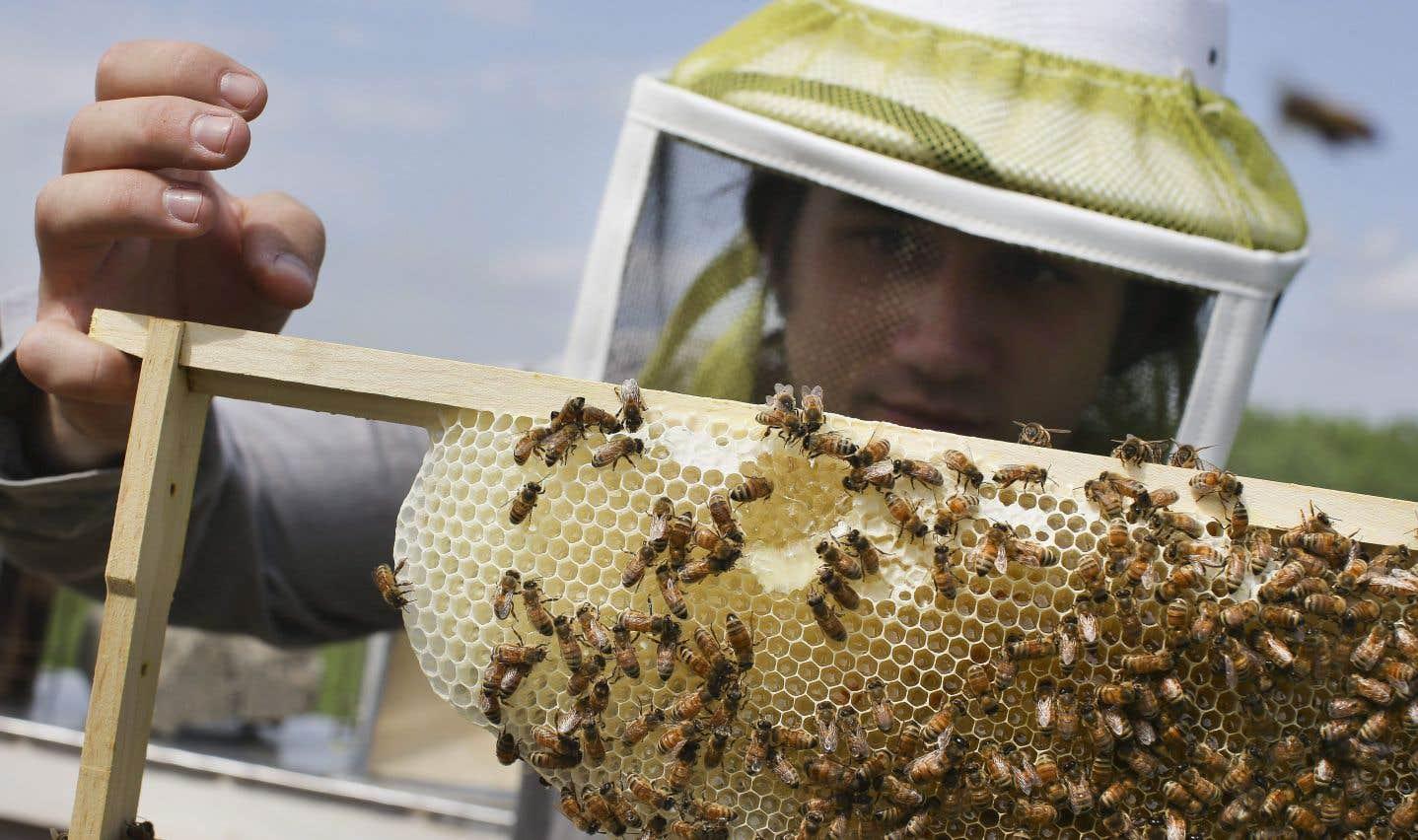 Le miel contaminé par des pesticides sur tous les continents