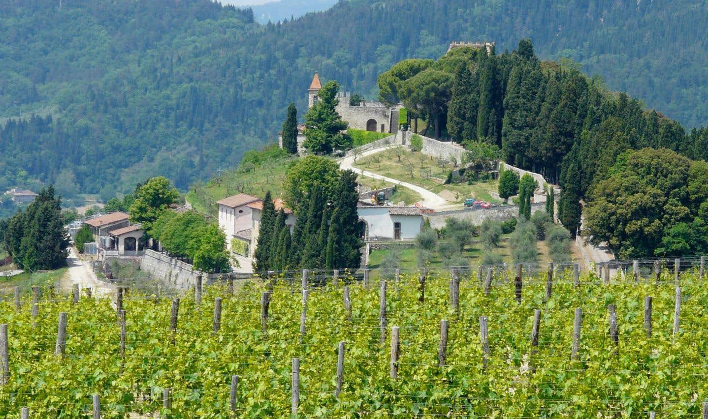 Vignoble de la région du Chianti, en Toscane