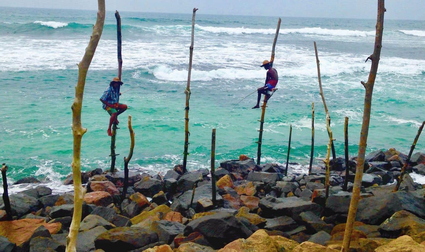 Les pêcheurs se juchent sur leurs perchoirs à l'aube; les «poseurs» s'y installent l'après-midi pour gagner quelques roupies. Indissociable de la destination...