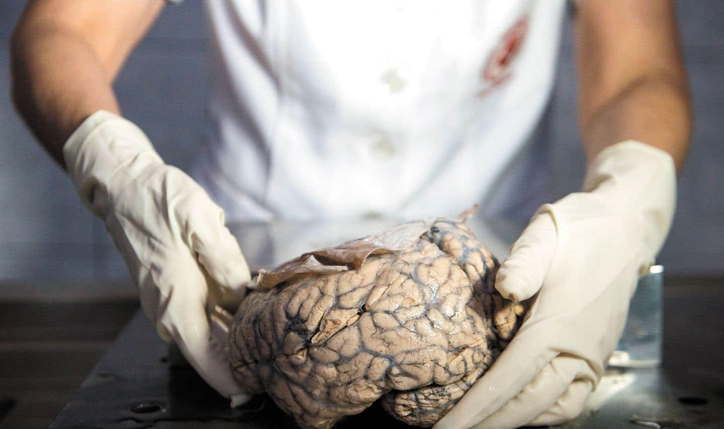 Cette sensation de familiarité serait bien cérébrale et plus précisément liée au processus de mémorisation.