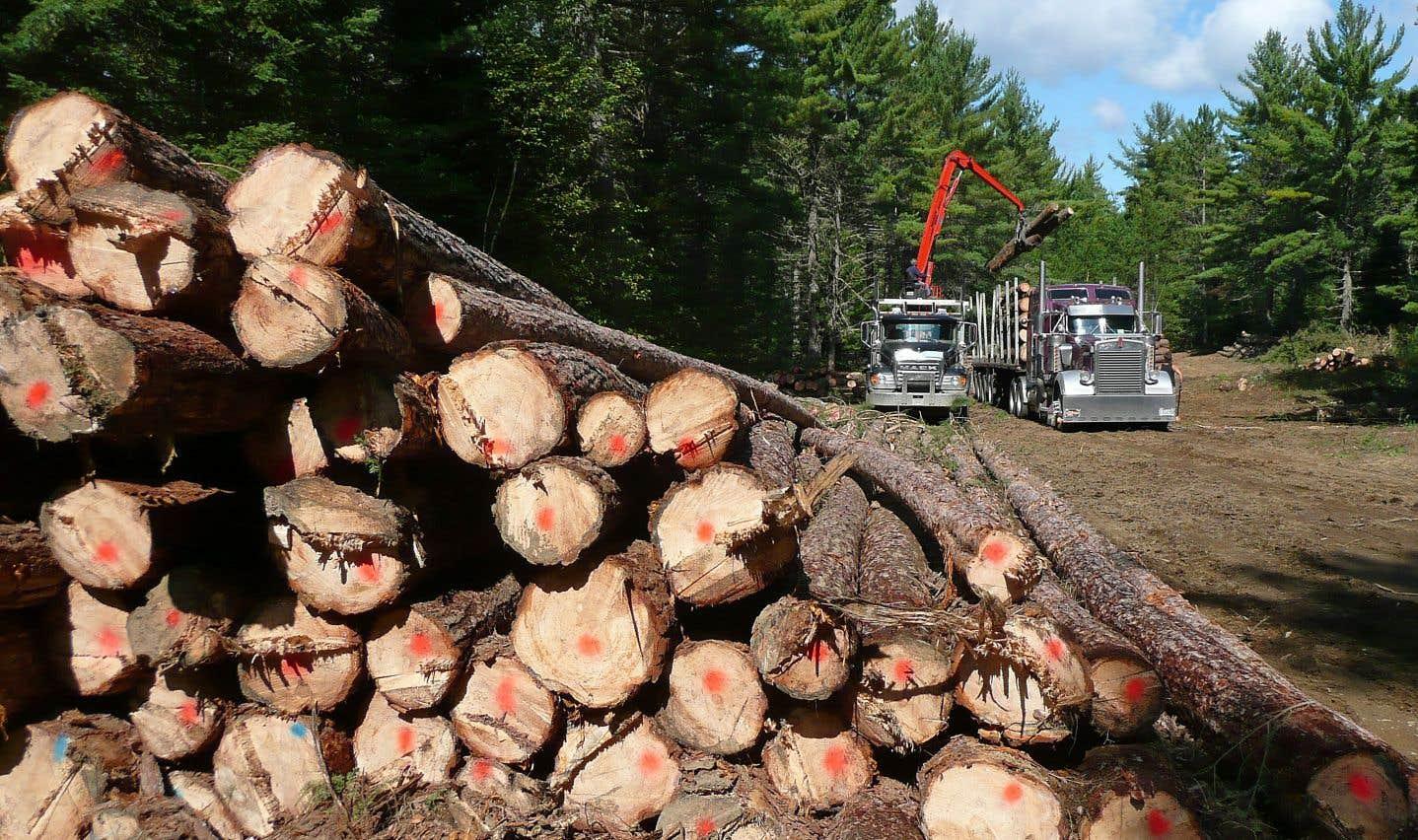 Selon un plan stratégique, les investissements du Fonds FTQ doivent privilégier une présence accrue dans les secteurs névralgiques des produits forestiers, entre autres.