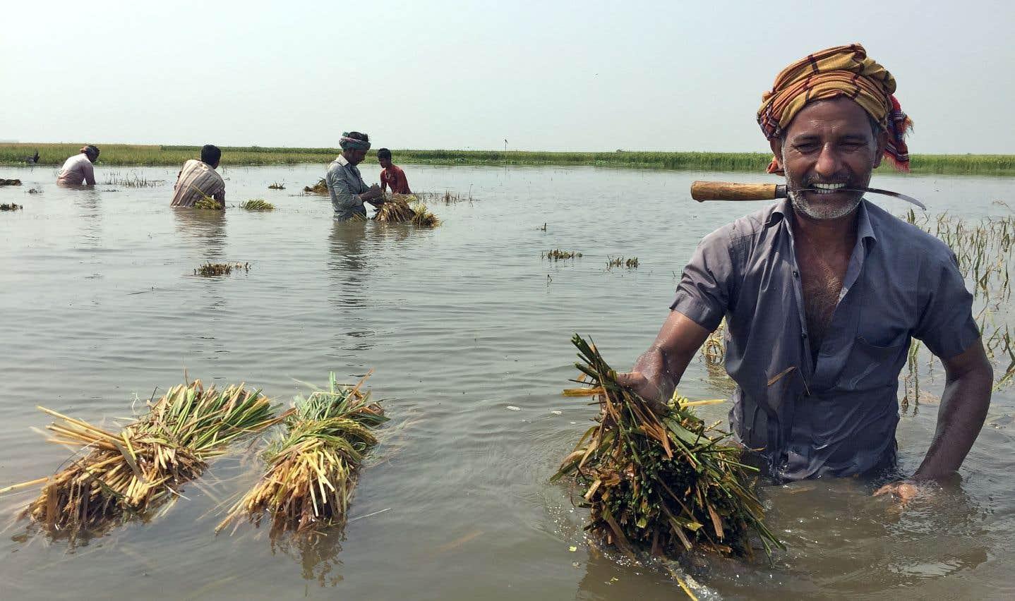 Quand les fleuves avalent les terres et habitations au Bangladesh