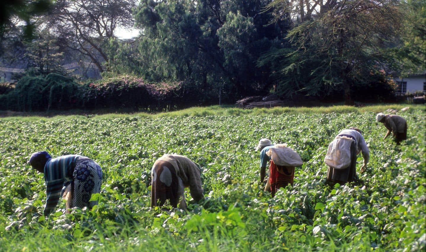 La sécurité alimentaire, une affaire collective