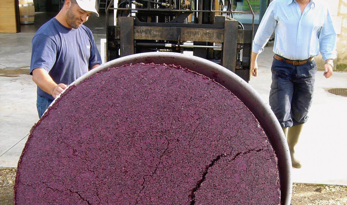 La qualité des tanins apparaît primordiale en ce qui a trait à la qualité d'un vin. Sur la photo, du marc de merlot soutenu en polyphénols.