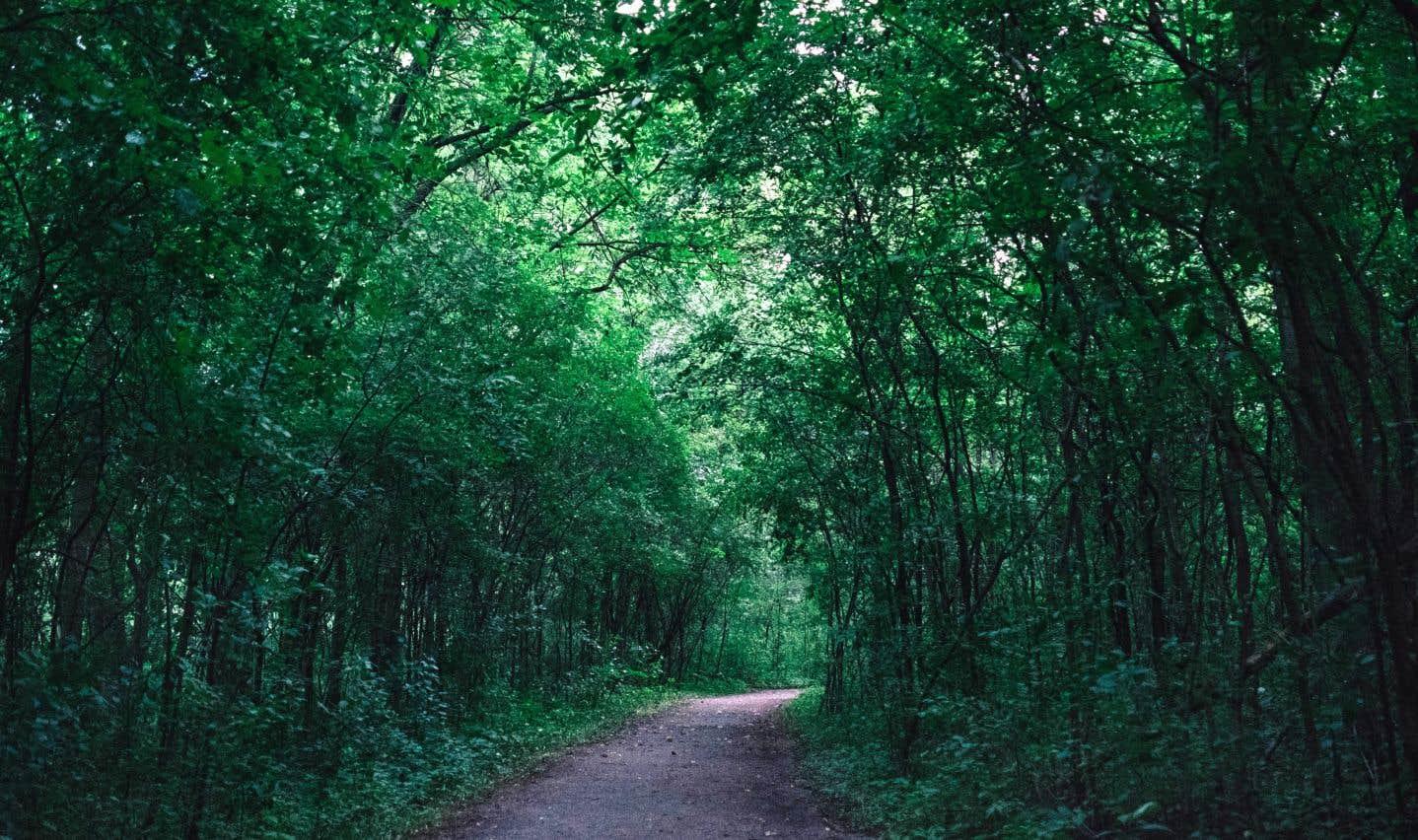 Entre 1985 et 2010, plus de deux millions d'arbres ont été plantés dans les forêts gérées par Solifor Perthuis, dans la région de Portneuf, afin de renouveler la forêt qui s'était dégradée et d'aider à absorber du carbone de l'atmosphère.
