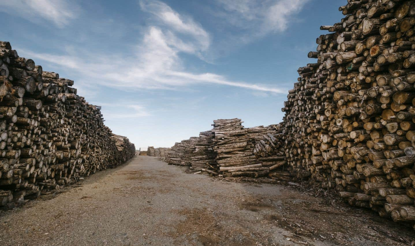 Tout comme l'agriculture, l'industrie du bois demeure très présente dans la circonscription.