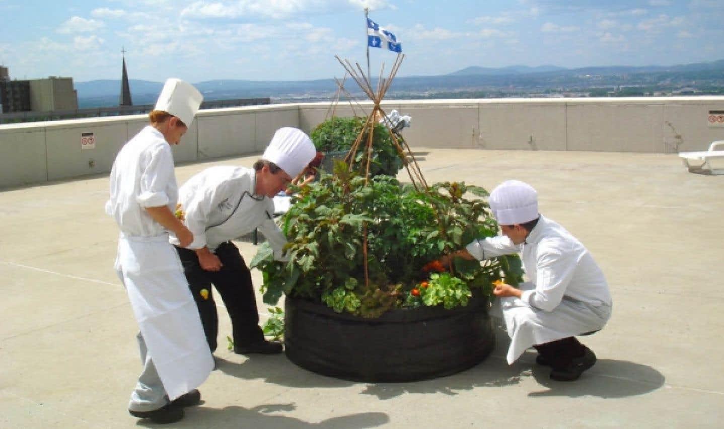 Sur le toit de l'hôtel Hilton, on récolte des fleurs, des fines herbes et des légumes pour les cuisines et les employés.