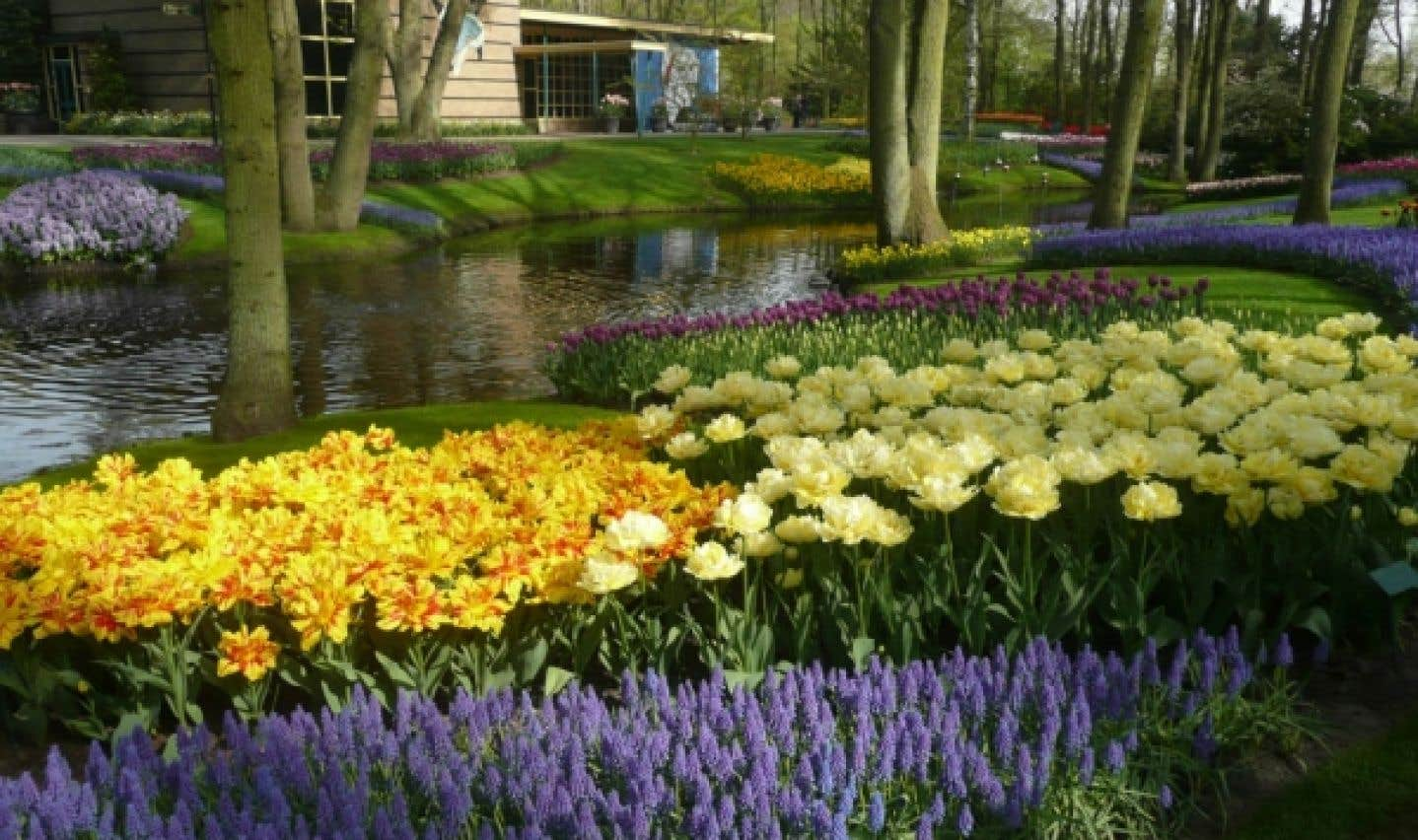 Le jardin néerlandais Keukenhof est entièrement consacré aux bulbes.