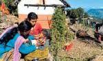 Le 26 novembre 2011, une infirmière népalaise examine un enfant de 2 ans qui souffre de malnutrition dans la ville de Mangalsen, située à environ 800 km à l'ouest de Katmandou au Népal.
