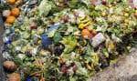 Les responsables d'organismes humanitaires déplorent les conteneurs à déchets remplis de nourriture jetée par les chaînes d'alimentation, alors que de nombreux humains souffrent encore de la faim.