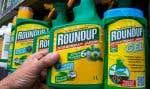 L'OMS a classé le glyphosate, herbicide notamment connu sous la marque Roundup, comme «cancérogène probable pour l'humain».