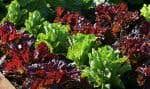 La politique bioalimentaire du gouvernement Couillard est assortie d'investissements totalisant cinq milliards de dollars sur cinq ans.