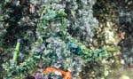 Une femme habillée en arbre dans une rue résidentielle lors du sommet sur le climat de San Francisco.