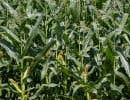 Les Producteurs de grains du Québec ont fait valoir lundi que la fiscalité agricole ne représente pas un poids pour les contribuables.